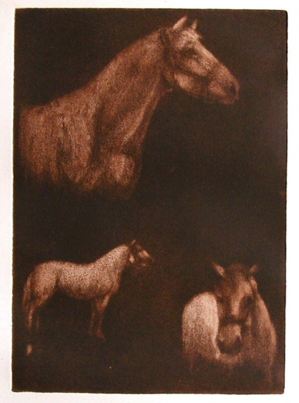 Horses 3 (Study)  2006  Picture