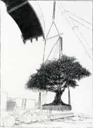 Urban Tree II, 2008